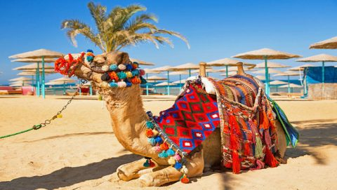 Camel on Hurghada Beach - www.apartmentsinhurghada.com