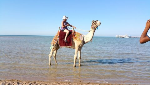 Easy Travel to Hurghada With EasyJet - Ferry Between Hugrhada and Sharm El-Sheikh Resumed - Holiday Rentals in Hurghada - www.apartmentsinhurghada.com - Book Online Today!