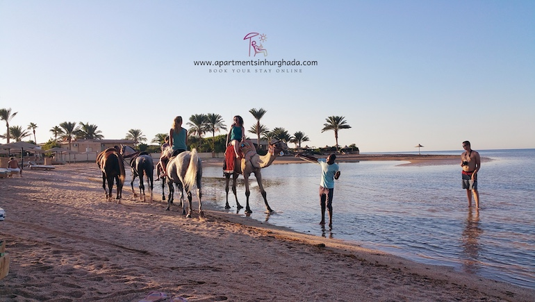 A More Efficient Booking Experience - Book Your Holiday Rental in Hurghada Online - www.apartmentsinhurghada.com
